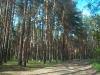Дорога к музею паровозов
